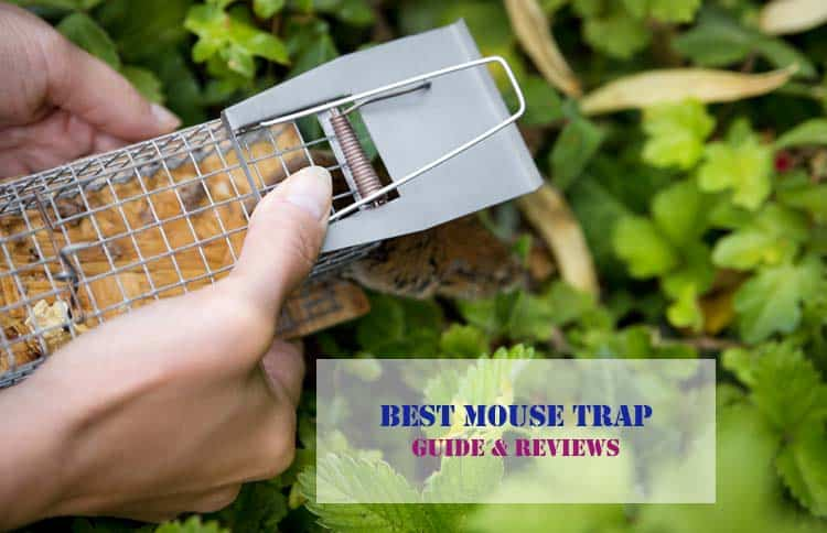 10 Best Mouse Traps in 2019- Reviews & Buyer's Guide