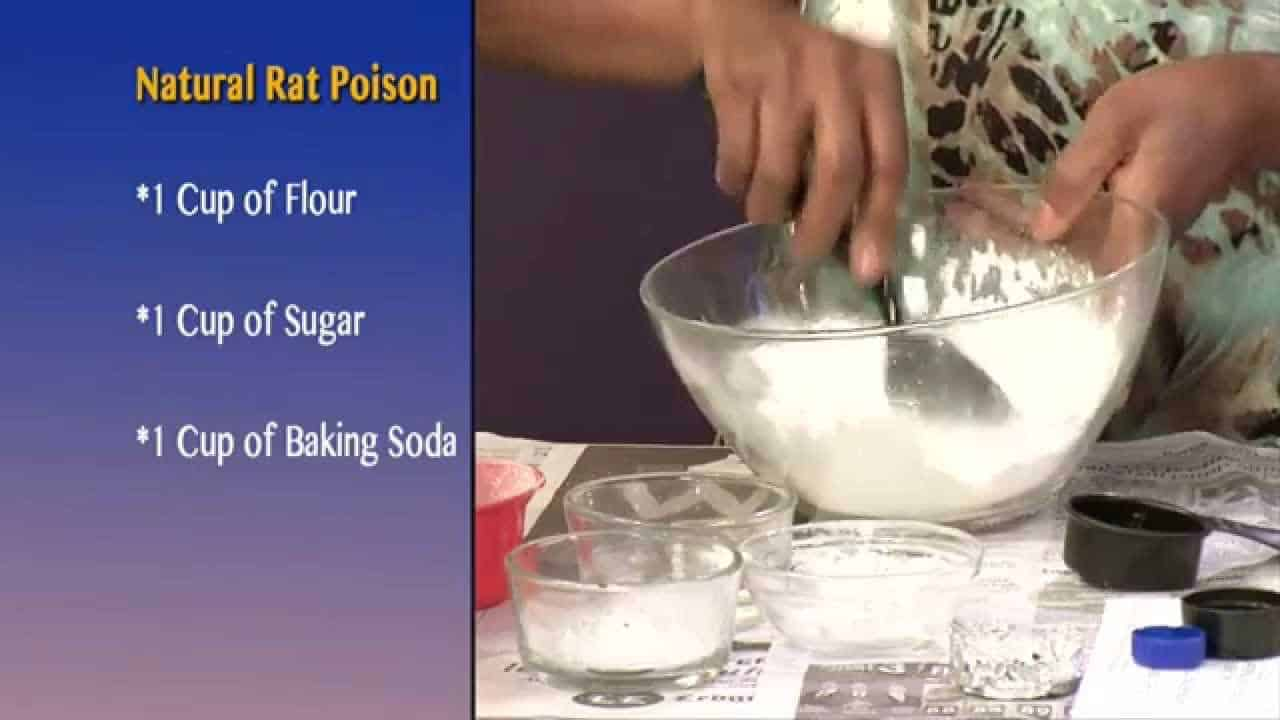How to Make Mouse Poison : (3 Best Homemade Methods)