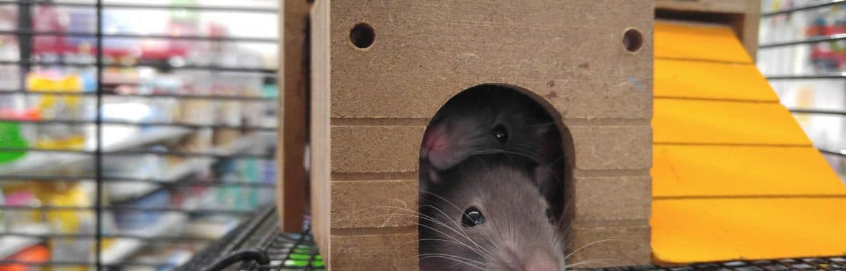 How to Make a Mouse Trap