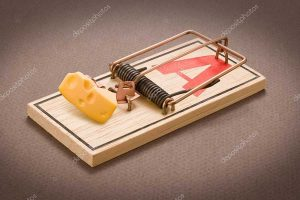 how to bait a mouse trap