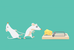 How does a mouse trap work